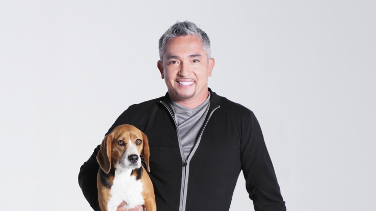Cesar Millan live show in Budapest